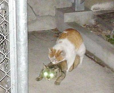 секс кошек фото