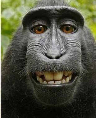 maimuta care s-a pozat singura