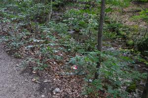 poze cascada bigar Bozovici